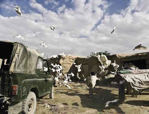 afghan-_1.jpg