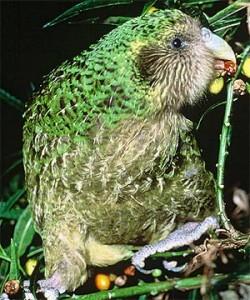 Kakapo Awareness Comes to Kindergarten